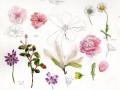 花のスケッチ(20140409)