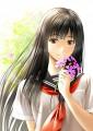 サクラソウ -Primula sieboldii-